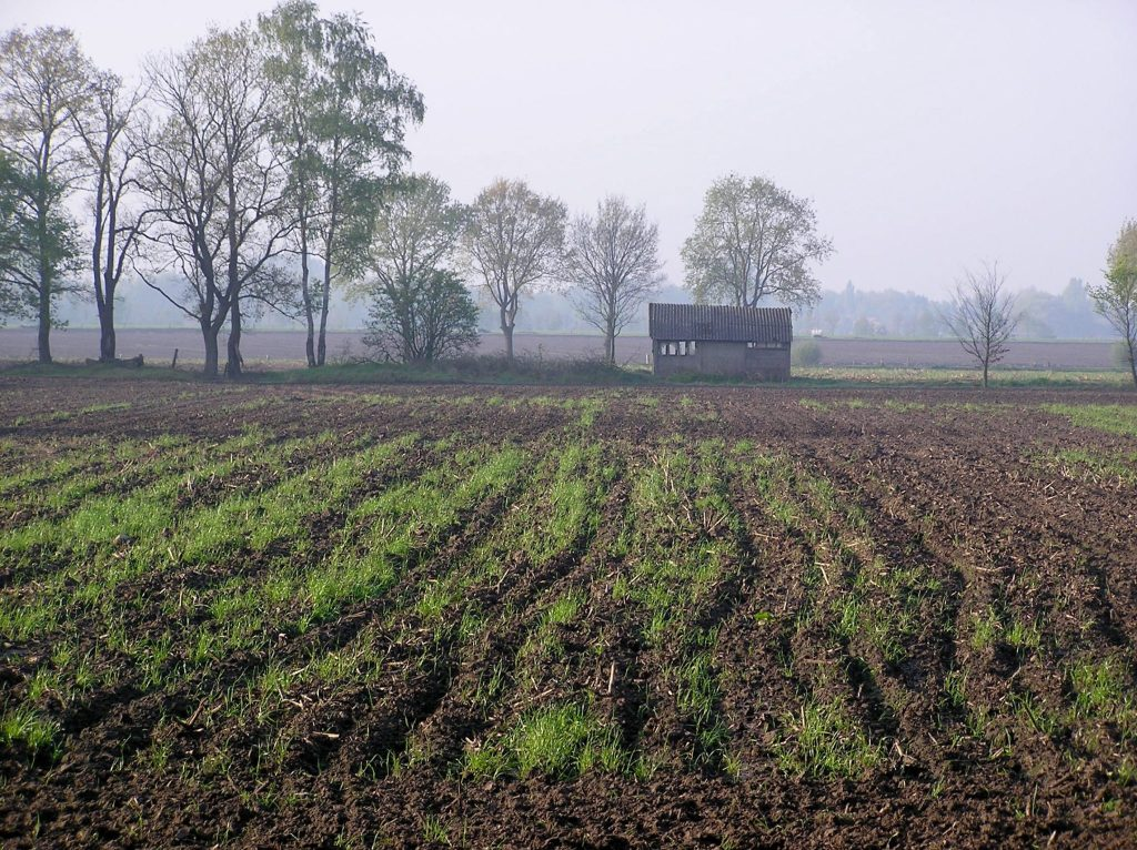 Early spring field by Klooster Nieuwkerk