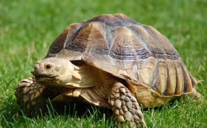 405x250_tortoise
